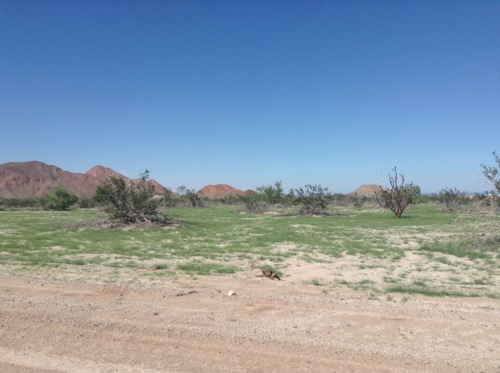 The Desert turned green!